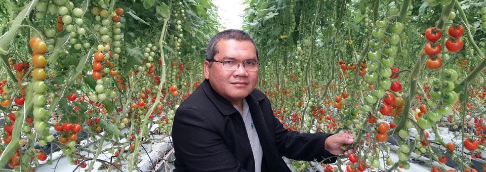 edisugiyanto_cherry_tomato