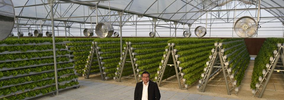 lettuce a_frame