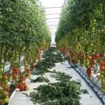 Hidroponik Greenhouse Dan Bercocok Tanam Hidroponik