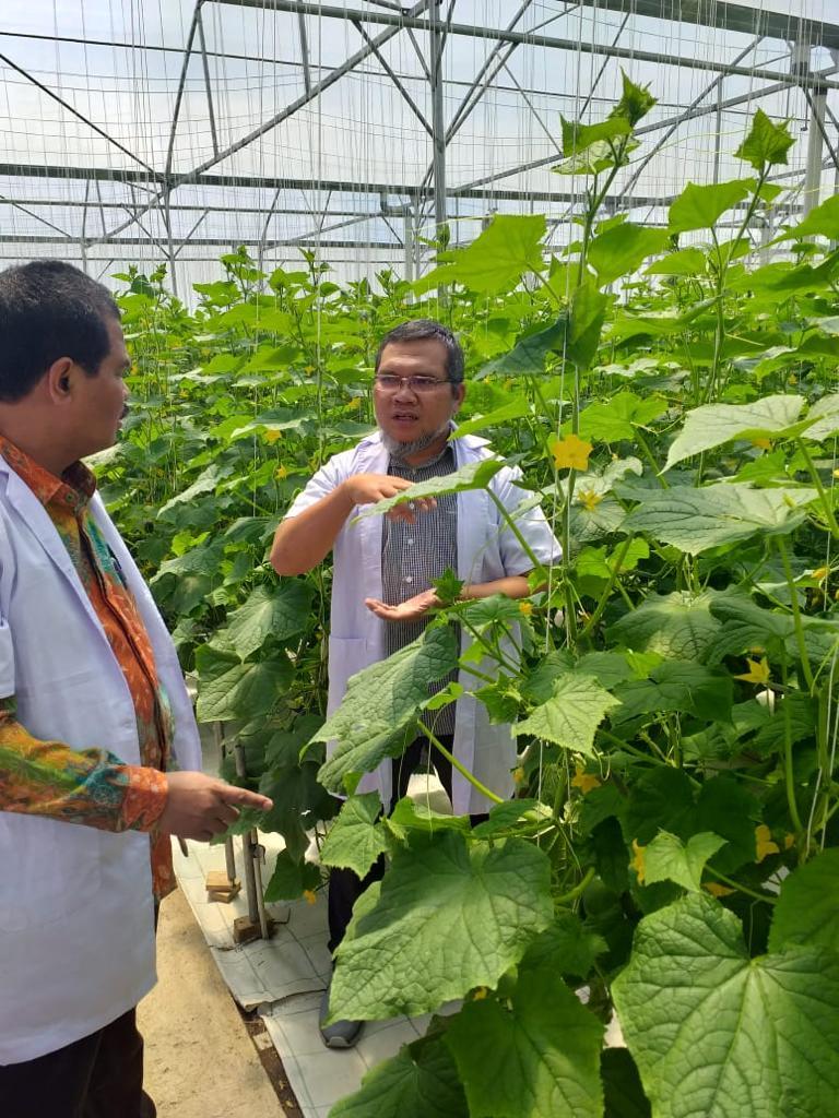 Canggih Petani Tomat Milenial Di Pangalengan Gunakan